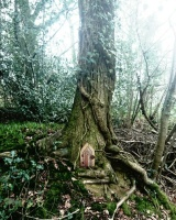Broadmoor woods fairy door Holywell lane